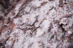 Bark tree Royalty Free Stock Image