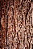 Bark Tree. Texture full frame in nature royalty free stock photos