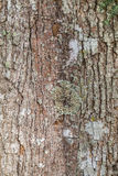 Bark of tree Royalty Free Stock Images