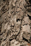 Bark of a tree Stock Image