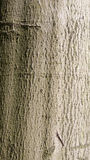 Bark of a tree Royalty Free Stock Photos