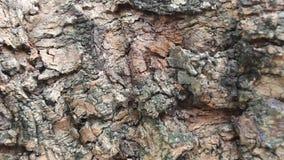 Bark tree. The Bark tree ,Bark tree stock video