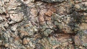Bark tree stock footage