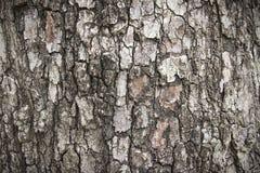 Bark. The bark of the tree Stock Photos