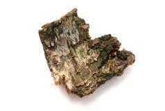 Bark of tree Stock Image