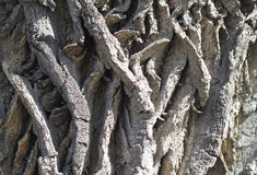 Bark tree Royalty Free Stock Photography