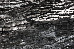 Bark of tree. Bark of a tree in autumn royalty free stock photography