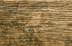 Bark of tree background Royalty Free Stock Image