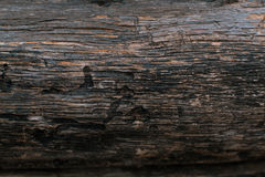Bark of a tree background. Royalty Free Stock Photos