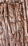 Bark of tree Stock Photo