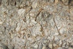 Bark of tree Royalty Free Stock Photo