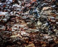 Bark of tree Stock Image