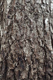 Bark of Tree Background Royalty Free Stock Images