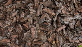 Bark of a tree. Background - Bark of a tree in pieces stock photos