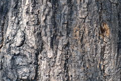 Bark tree. Background texture with some light stock image
