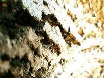 The bark of the tree stock photos