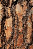 Bark of a tree. In the forest stock image