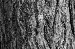 Bark of a tree in black and white Stock Image