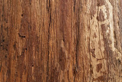Bark tree. Blurry background texture of the brown color bark tree royalty free stock images