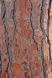 The bark of the tree is of brown color. Background for your Design, Templates, Samples.  stock photos