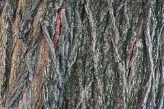 Bark of tree. Stock Image