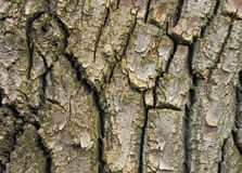 Bark of tree Stock Photos
