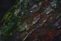 Bark of tree close-up moss green ginger gray color wood royalty free stock photos