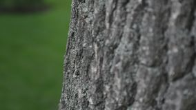 Bark of tree close up. selective focus.  stock video footage