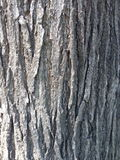 The bark of a tree close-up texture Royalty Free Stock Images