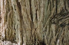 Bark of tree, close up to the trunk of a tree. stock photo