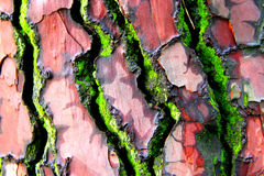 Bark tree in colours Stock Photo