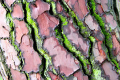 Bark tree in colours Stock Images