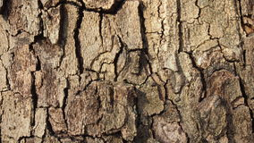 Bark of tree. Bark of a coniferous tree for a background and textures Royalty Free Stock Image