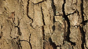 Bark of tree. Bark of a coniferous tree for a background and textures Stock Images