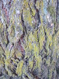 Bark of a tree covered with moss. Close up of bark of a redwood tree in a park at vancouver washington royalty free stock photo