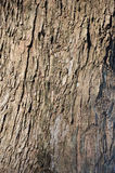 Bark tree Royalty Free Stock Images