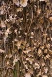 Bark tree Royalty Free Stock Photos
