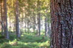 Bark of tree in forest for text message. stock photos