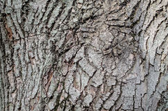 The bark. Of a tree in gray stock images