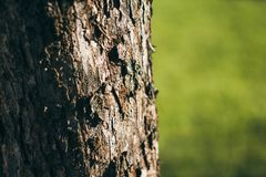 The bark of the tree on a green background. The tree on the background of grass. Tree bark close-up stock photo