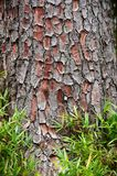 Bark tree and green grass texture background.  stock images
