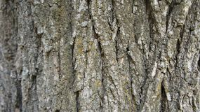 Bark of a tree grunge texture background Stock Photo