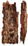 Bark tree Stock Images