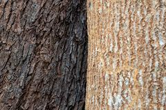 The bark of a tree two stock photos
