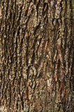 Bark of a tree Stock Images