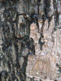 Bark on tree Royalty Free Stock Images