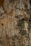 The bark of the tree with a jagged period. stock photos