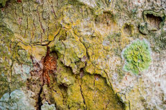 Bark of tree in nature. Seamless Texture, photographed by close Stock Images