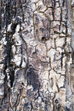 Bark of tree nature texture. Background stock images