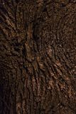 The bark of a tree is  in a night park Royalty Free Stock Image